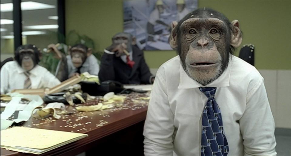 chimp-960x623